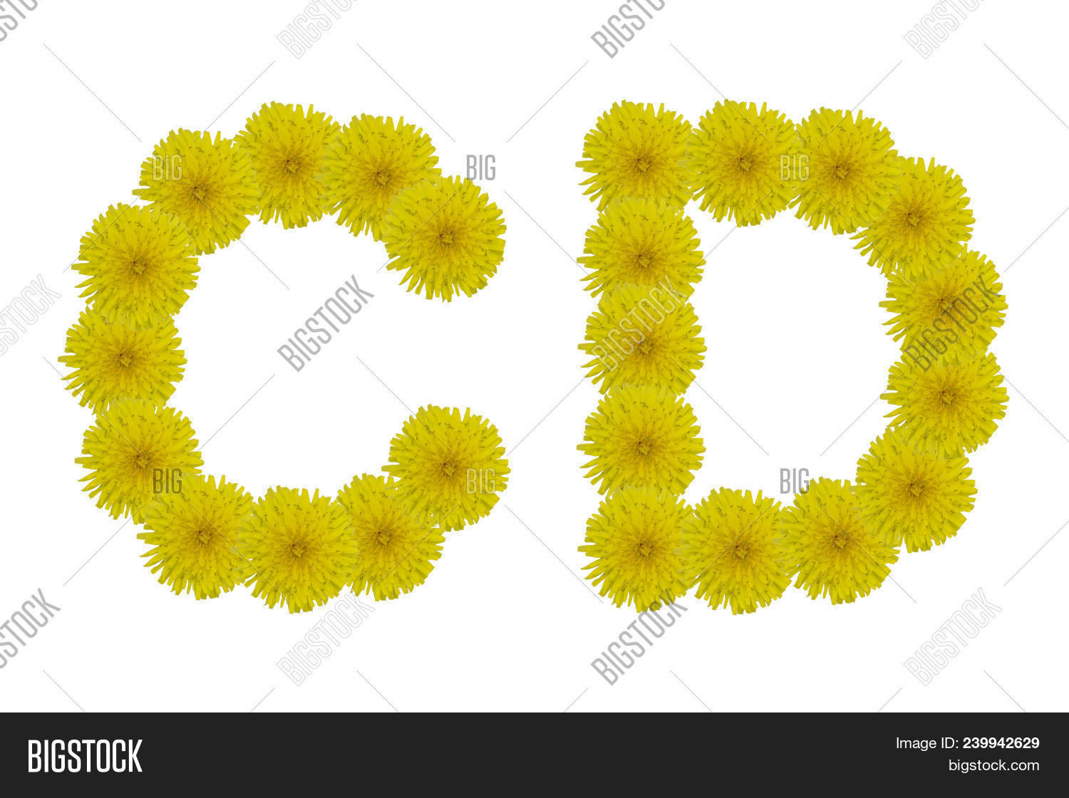Floral Letters C D Image Photo Free Trial Bigstock