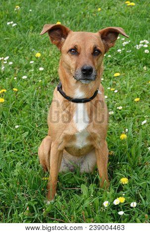 Lovely adopted mongrel dog