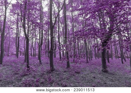 Forest Through Infrared Filter Forming Purple Tint