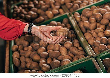 Partial View Of Shopper Choosing Fresh Raw Potato In Hypermarket