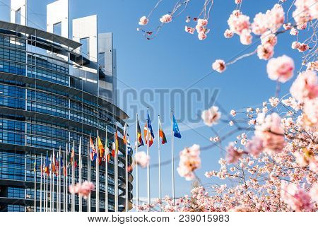 Strasbourg, France - April 6, 2018: European Parliament Facade With Cherry Tree In Bloom Sakura Flow