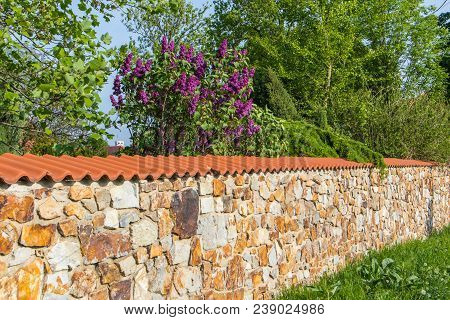 Stone Wall With Purple Lilac Bush In Sunny Day