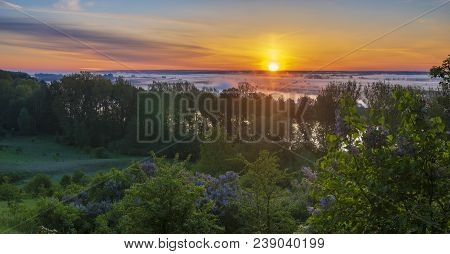 Misty And Multicolored Dawn Over The River Valley,blooming Lilacs- River Odra, Germany