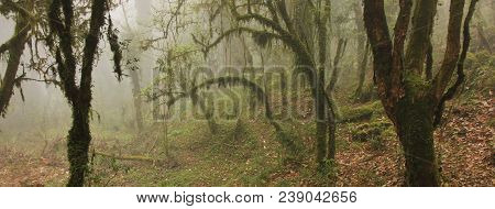 Green Jungle On A Fogy Spring Day. Scene On The Way From Ghandruk To Tadapani, Nepal. Mystic Atmosph