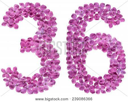 Arabic Numeral 36, Thirty Six, From Flowers Of Lilac, Isolated On White Background