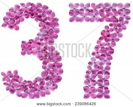 Arabic Numeral 37, Thirty Seven, From Flowers Of Lilac, Isolated On White Background