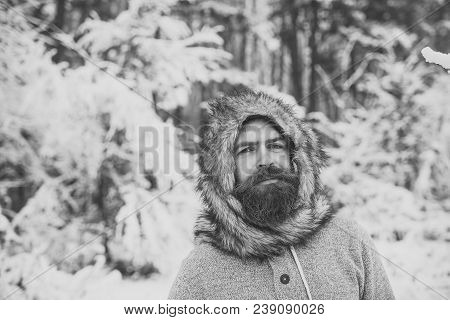 Hipster Or Bearded Man In Thermal Jacket, Fur Hat In Snowy Forest. Beard Warm In Winter. Skincare, B