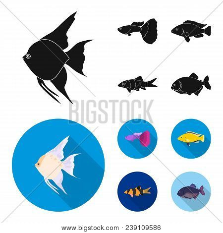 Botia, Clown, Piranha, Cichlid, Hummingbird, Guppy, Fish Set Collection Icons In Black, Flat Style V