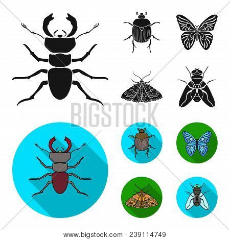 Wrecker, Parasite, Nature, Butterfly .insects Set Collection Icons In Black, Flat Style Vector Symbo