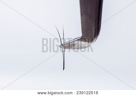 Eyelash Extension Tools On White Background. Accessories For Eyelash Extensions. Artificial Lashes.