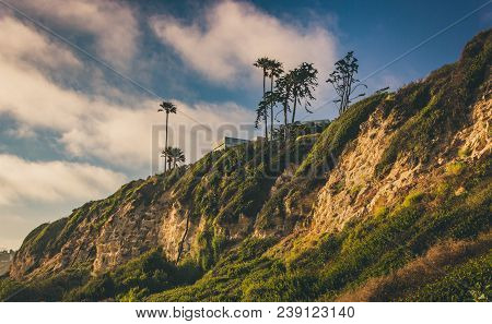 Cliffs And Palm Trees During Sunset At Point Dume State Beach, Malibu, California