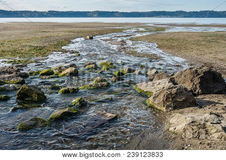 A Stream Flows Across The Shoreline And Into The Puget Sound At Dash Pioint State Park In Washington
