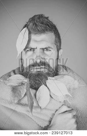 Leaves Beard At Barber And Hairdresser. Man With Natural Yellow Fall Leaves Beard In Plaid. Cold And