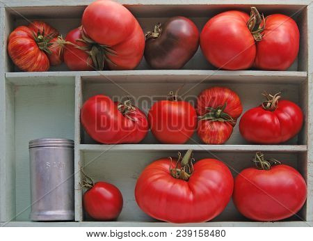 Large And Small Heirloom Tomatoes In A Box With An Antique Salt Shaker