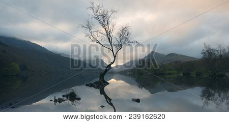 Lone tree at Llyn Padarn at break of dawn