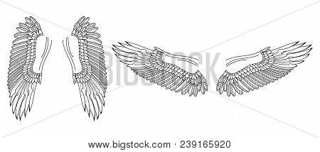 Wings Sketch. Bird Or Angel Hand Drawn Wings. Vector Illustration.
