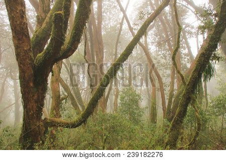 Rainforest Near Pokhara On A Fogy Spring Day. Mystic Ambience.
