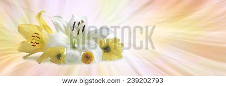 Special Flowers For A Special Occasion - A White Lily, A Yellow Lily And Three Daisies Grouped Toget