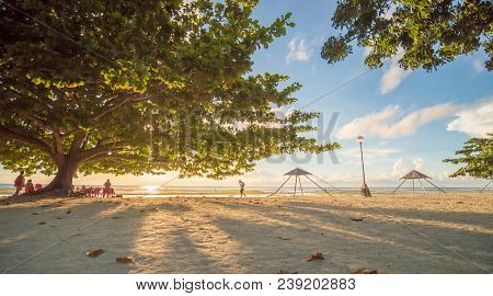 Tourists under a large deciduous tree of life with red-green leaves. The rays of the morning sun through the leaves of a tree on the exotic Anda beach. Bohol. Philippines. Shooting in motion poster
