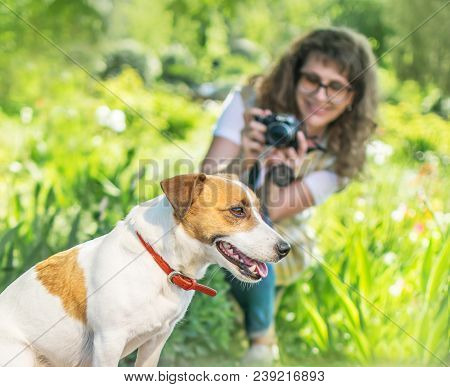 Young Happy Smiling Woman Photographer Taking A Photo Of Sitting Small Dog Jack Russel Terrier Outsi