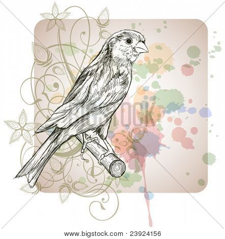 Sketch of a canary bird sitting on a branch & floral calligraphy ornament - a stylized orchid,  color paint background. Bitmap copy my vector ID 70185769 poster
