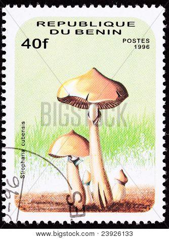Benin Postage Stamp Psilocybin, Psychedelic Mushroom, Psilocybe Cubensis, Stropharia Cubensis-