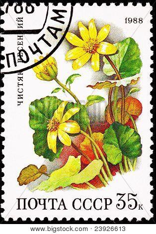 Soviet Russia Stamp Yellow Lesser Celandine Ranunculus Ficaria
