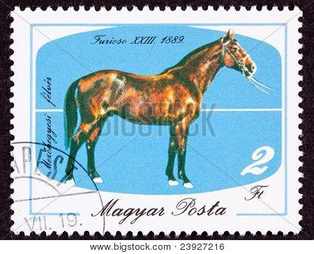 Canceled Hungary Postage Stamp Hungarian Horse Breeds Furioso Isolated Background