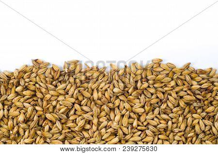 Barley malt texture pale ale for backgrounds, half malt image, half image with white background. poster