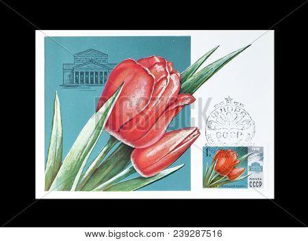 Soviet Union - Circa 1978 : Cancelled Postage Stamp Printed By Soviet Union, That Shows Tulip Bolsho