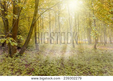 Sunny Forest With Sun Rays In Spring Colors