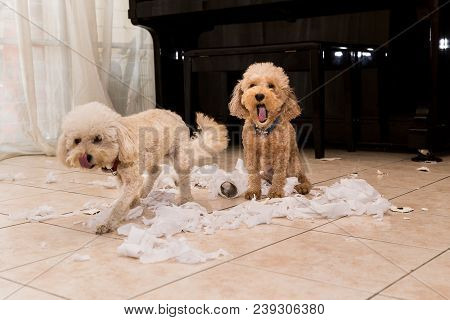 Naughty And Bored Dog Destroyed Tissue Roll Into Pieces When Home Alone