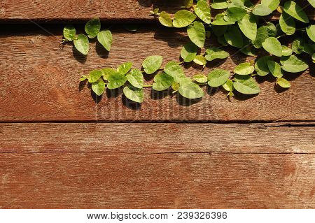 Tridax Procumbens Creeper Plant On Wooden Background