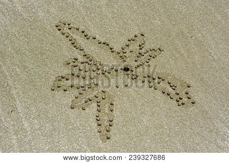 Floral Inflated Sand Pellets Formed By Sand Bubbler Crab At Cape Hillsborough Beach In Queensland, A