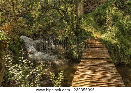 A Pedestrian Bridge Over A Stream On The Yellowwood Forest Hiking Trail At Injisuthi In The Kwazulu-