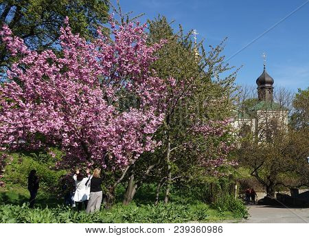 Kiev, Ukraine - May 01, 2018. People In The Botanical Garden In Kiev Are Admiring The Blossoming Spr