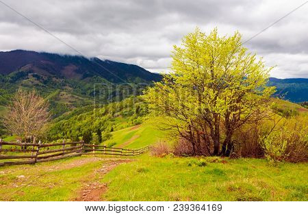 Mountainous Countryside In Springtime. Fence Down The Hill Along The Country Road. Tree On The Grass