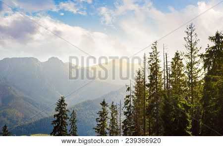 High Tarta Mountains Behind The Trees. Lovely Nature Scenery In Beautiful Light.