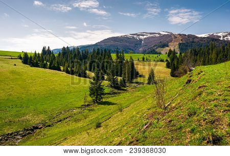 Grassy Hills At The Foot Of The Ridge. Beautiful Nature Scenery Of Borzhava Mountain Ridge. Springti