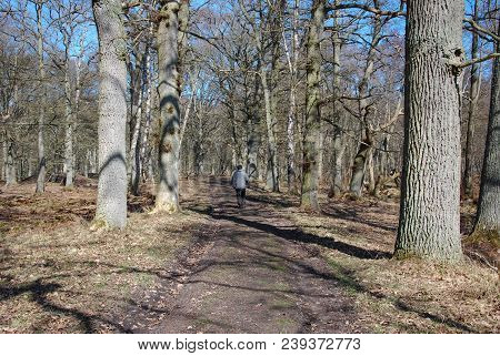 Springtime Walk In The Nature Reserve At Ottenby On The Swedish Island Oland In The Baltic Sea