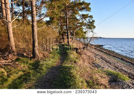 Footpath By The Shoreline At The Swedish Island Oland In The Baltic Sea
