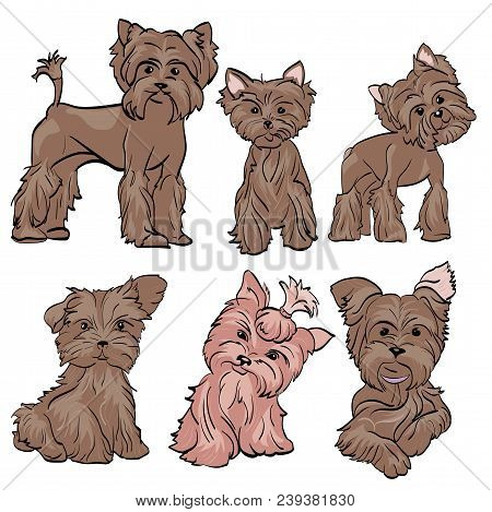 A Sketch Of A Little Dog Breed Yorkshire Terrier. Figure Mini Fashion Dogs Of The Breed. Dogs With D