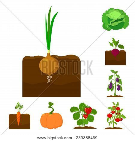 Plant, Vegetable Cartoon Icons In Set Collection For Design. Garden And Harvest Vector Symbol Stock