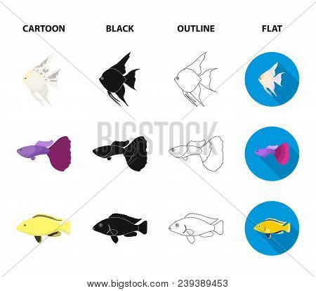 Botia, Clown, Piranha, Cichlid, Hummingbird, Guppy, Fish Set Collection Icons In Cartoon, Black, Out