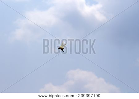 Dragonfly With Orange Wings In Blue Sky. Tropical Insect Flying In Empty Sky. Damselfly With Yellow