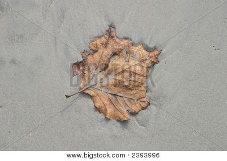 Leaf On Beach