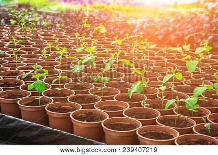 Growing Seedlings In Peat Pots. Plants Seeding In Sunlight In Modern Botany Greenhouse, Horticulture