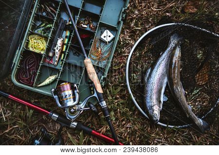 Aerial view of tackle box and fish on the ground