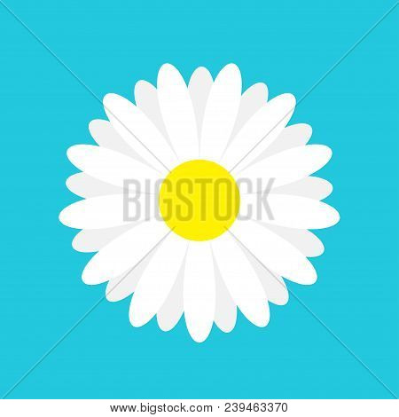 White Daisy Chamomile Marguerite Icon. Cute Flower Plant Collection. Love Card. Camomile Icon Growin