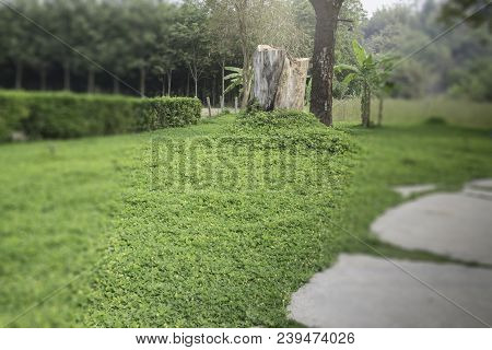Nice Fresh Green Bush Leaves, Stock Photo